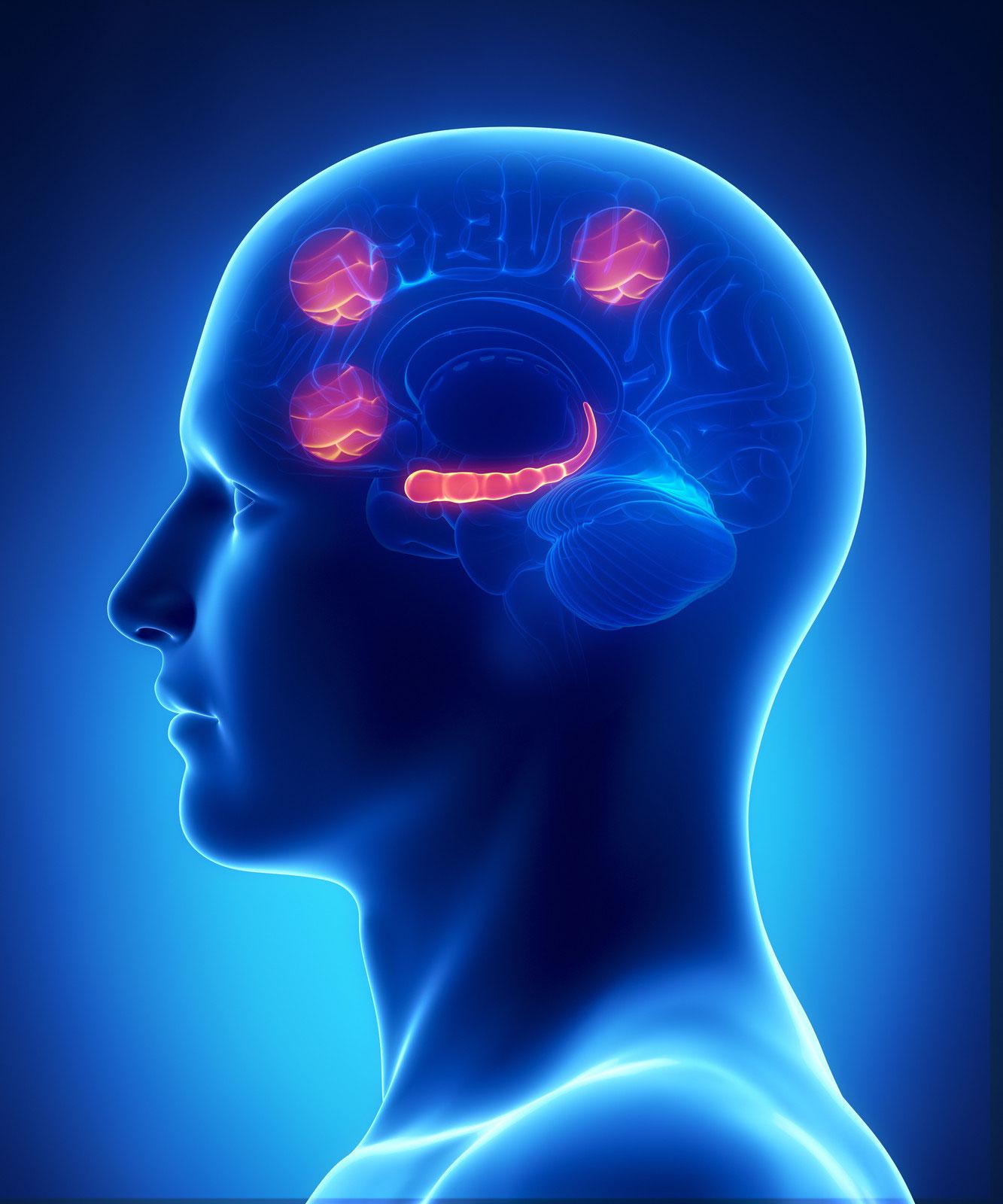 Course Image Modelos neuropsicológicos e instrumentos de evaluación de la memoria semántica