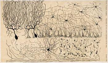Course Image La Calidad de Vida en el marco de las Neurociencias